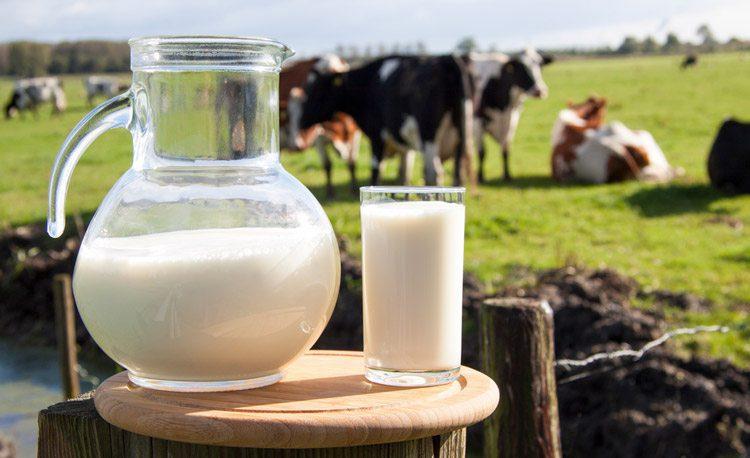 קנקן חלב וברקע פרות רועות