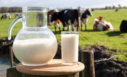 על רגישות ועל חלב